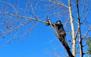 potatura manutenzione alberi roma preventivi